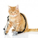chat veterinaire
