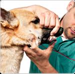 choisir son vétérinaire