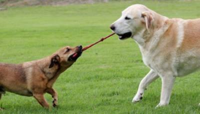jeu entre chiens