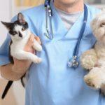 veterinaire avec chat et chien